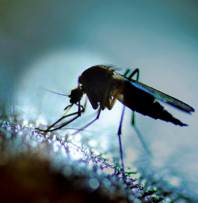 Do You Still Need to Worry About Zika Virus? - DCDocs